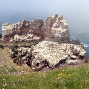Guillemot colony at St Abbs