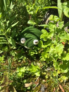 Froggy in the wild garden