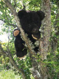 Bramble bear in the wild garden